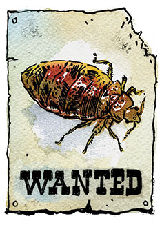 bed bugs illustration